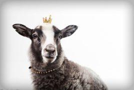 女性のタイプ別攻略法!  動物占い「羊」編